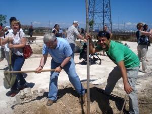 Românii au plantat 300 de copaci în Getafe