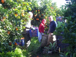 Recoltele agricole din Andalucia sunt culese de muncitori români