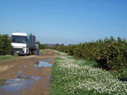 Moratoriul a redus numărul românilor angajati în agricultură la Sevilla