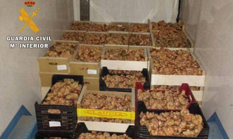 Spaniolii strâng semnături împotriva românilor care culeg ciuperci