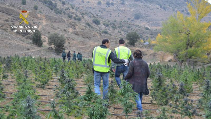 garda civila spania plante de marijuana